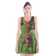 4 Full Staffordshire Bull Terrier Scoop Neck Skater Dress