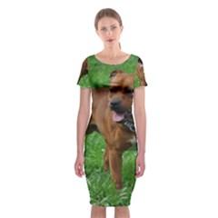 4 Full Staffordshire Bull Terrier Classic Short Sleeve Midi Dress