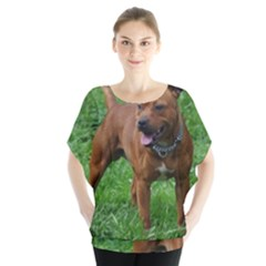 4 Full Staffordshire Bull Terrier Blouse