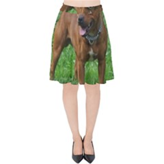 4 Full Staffordshire Bull Terrier Velvet High Waist Skirt