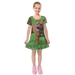 4 Full Staffordshire Bull Terrier Kids  Short Sleeve Velvet Dress