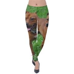 4 Full Staffordshire Bull Terrier Velvet Leggings