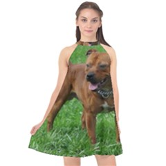 4 Full Staffordshire Bull Terrier Halter Neckline Chiffon Dress