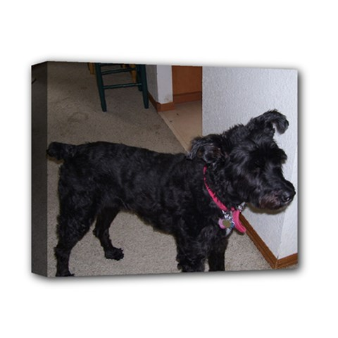 Bouvier Shaved Deluxe Canvas 14  X 11