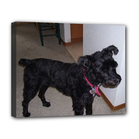 Bouvier Shaved Deluxe Canvas 20  X 16