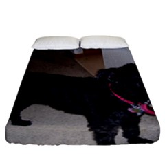 Bouvier Shaved Fitted Sheet (california King Size)