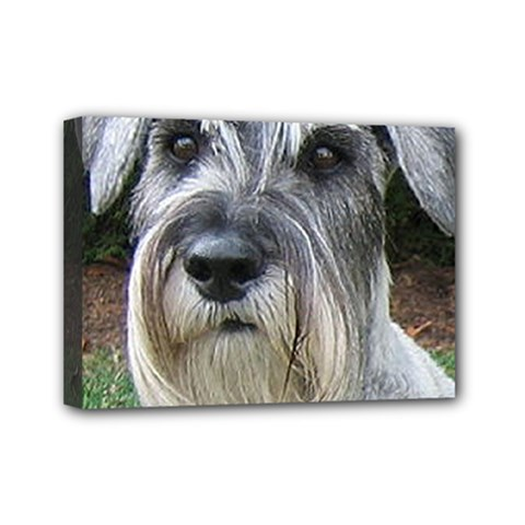 Standard Schnauzer 2 Mini Canvas 7  X 5
