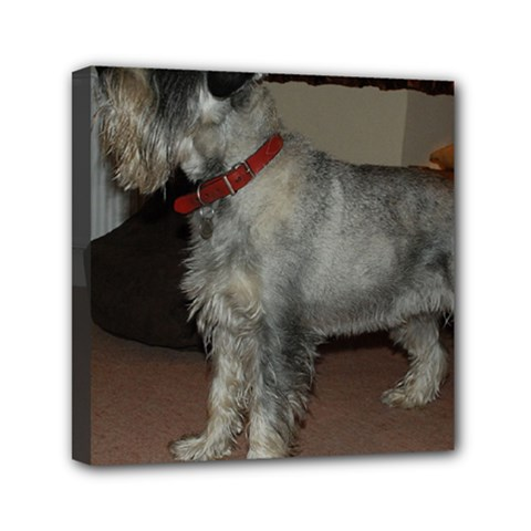 Standard Schnauzer Full Mini Canvas 6  X 6