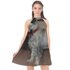 Standard Schnauzer Full Halter Neckline Chiffon Dress