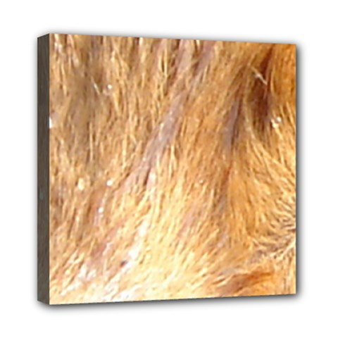Nova Scotia Duck Tolling Retriever Eyes Mini Canvas 8  X 8