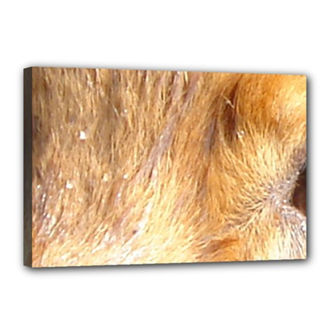Nova Scotia Duck Tolling Retriever Eyes Canvas 18  X 12