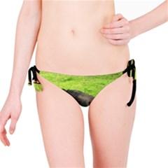 2 Full Flat Coated Retriever Bikini Bottom