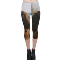 Flat Coated Retriever Capri Leggings