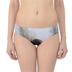 Flat Coated Retriever Hipster Bikini Bottoms