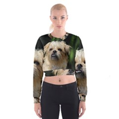 Brussels Griffon Cropped Sweatshirt