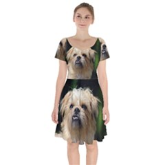 Brussels Griffon Short Sleeve Bardot Dress