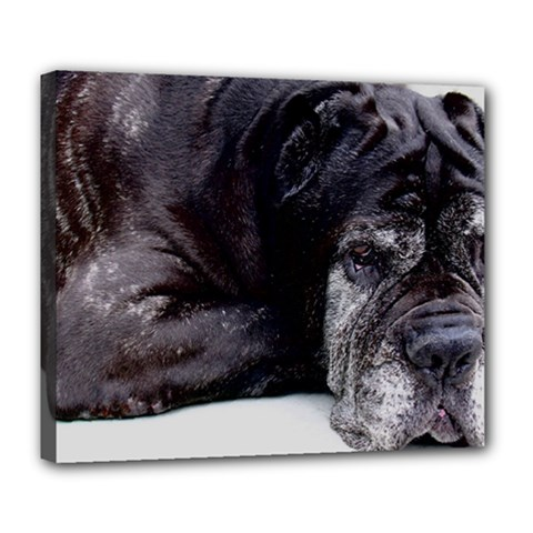 Neapolitan Mastiff Laying Deluxe Canvas 24  X 20