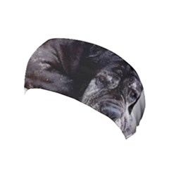 Neapolitan Mastiff Laying Yoga Headband