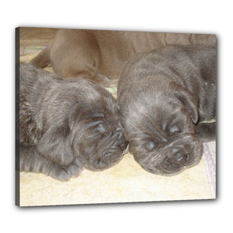 Neapolitan Pups Canvas 24  X 20