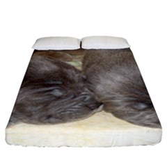 Neapolitan Pups Fitted Sheet (king Size)