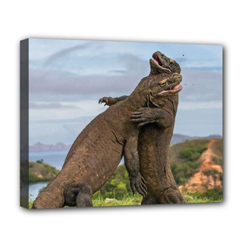 Komodo Dragons Fight Deluxe Canvas 20  X 16