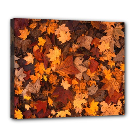 Fall Foliage Autumn Leaves October Deluxe Canvas 24  X 20
