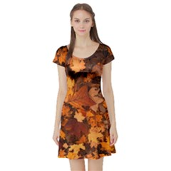 Fall Foliage Autumn Leaves October Short Sleeve Skater Dress