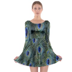 Peacock Feathers Blue Bird Nature Long Sleeve Skater Dress
