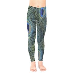 Peacock Feathers Blue Bird Nature Kids  Legging
