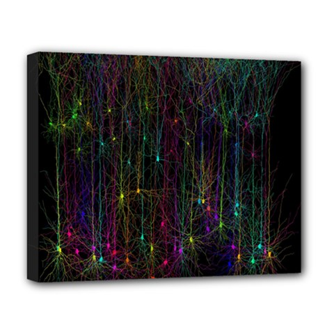 Brain Cell Dendrites Deluxe Canvas 20  X 16