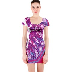 Histology Inc Histo Logistics Incorporated Masson s Trichrome Three Colour Staining Short Sleeve Bodycon Dress
