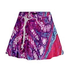 Histology Inc Histo Logistics Incorporated Masson s Trichrome Three Colour Staining Mini Flare Skirt
