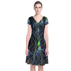 Synaptic Connections Between Pyramida Neurons And Gabaergic Interneurons Were Labeled Biotin During Short Sleeve Front Wrap Dress