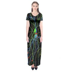 Synaptic Connections Between Pyramida Neurons And Gabaergic Interneurons Were Labeled Biotin During Short Sleeve Maxi Dress
