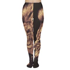 Angry Male Lion Gold Women s Tights