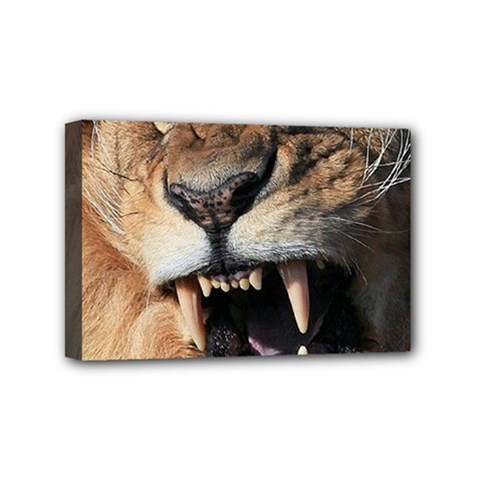 Male Lion Angry Mini Canvas 6  X 4