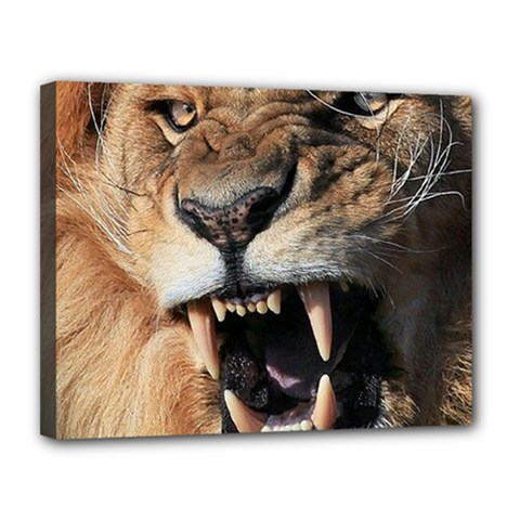 Male Lion Angry Canvas 14  X 11