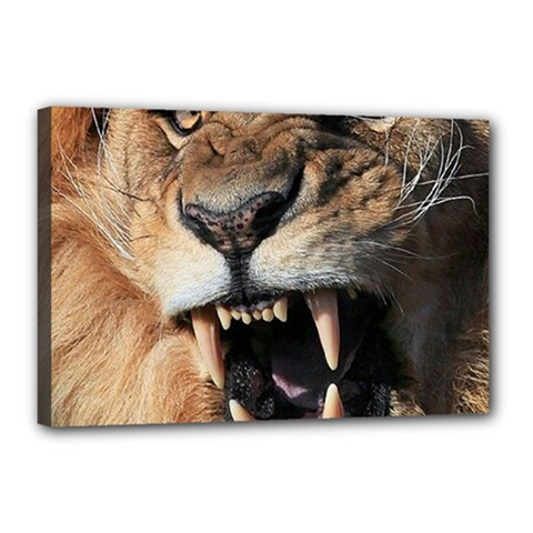 Male Lion Angry Canvas 18  X 12