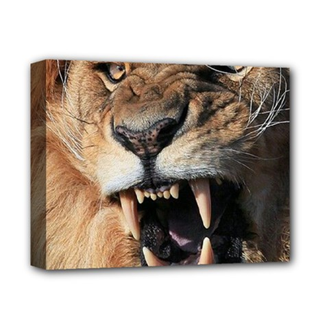 Male Lion Angry Deluxe Canvas 14  X 11
