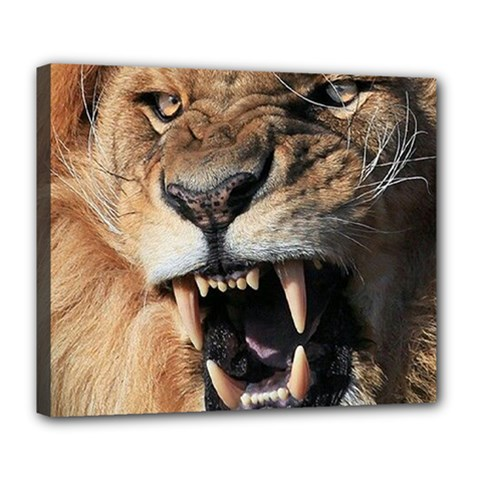 Male Lion Angry Deluxe Canvas 24  X 20