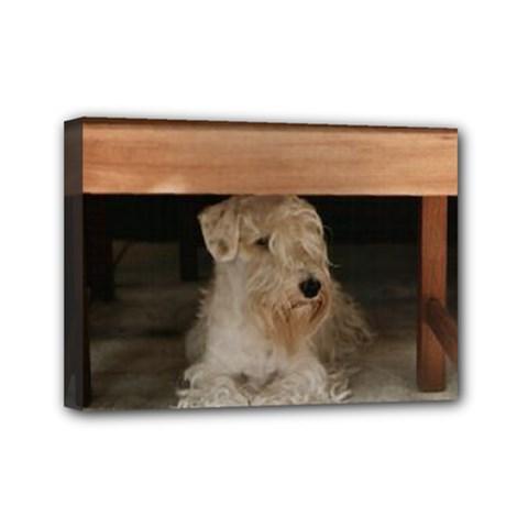 Sealyham Terrier Laying Mini Canvas 7  X 5