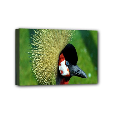 Bird Hairstyle Animals Sexy Beauty Mini Canvas 6  X 4