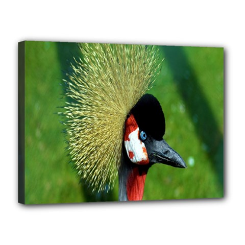 Bird Hairstyle Animals Sexy Beauty Canvas 16  X 12