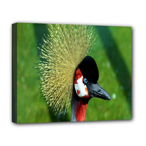 Bird Hairstyle Animals Sexy Beauty Deluxe Canvas 20  X 16