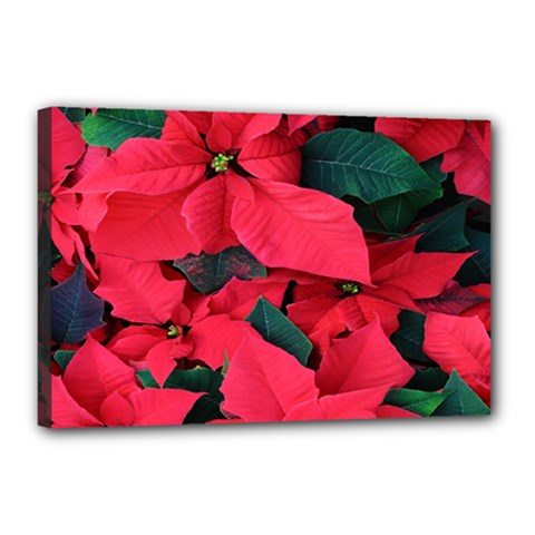 Red Poinsettia Flower Canvas 18  X 12