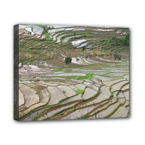 Rice Fields Terraced Terrace Canvas 10  X 8