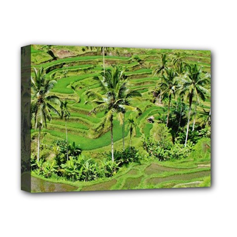 Greenery Paddy Fields Rice Crops Deluxe Canvas 16  X 12
