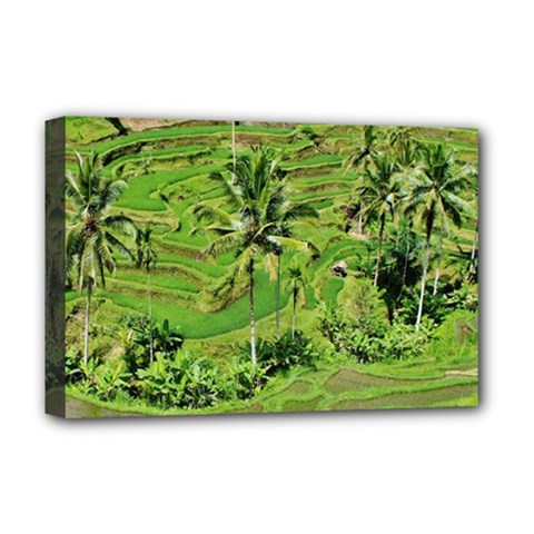 Greenery Paddy Fields Rice Crops Deluxe Canvas 18  X 12