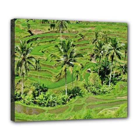 Greenery Paddy Fields Rice Crops Deluxe Canvas 24  X 20