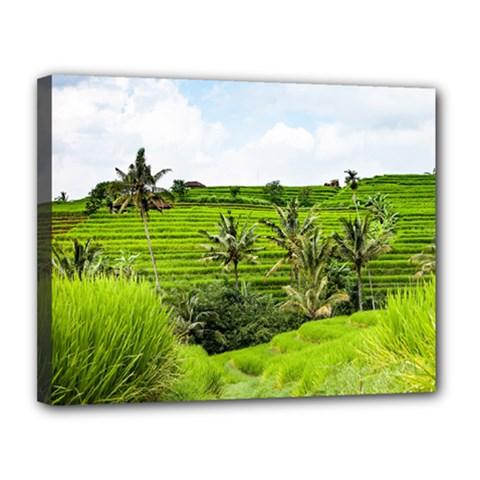 Bali Rice Terraces Landscape Rice Canvas 14  X 11